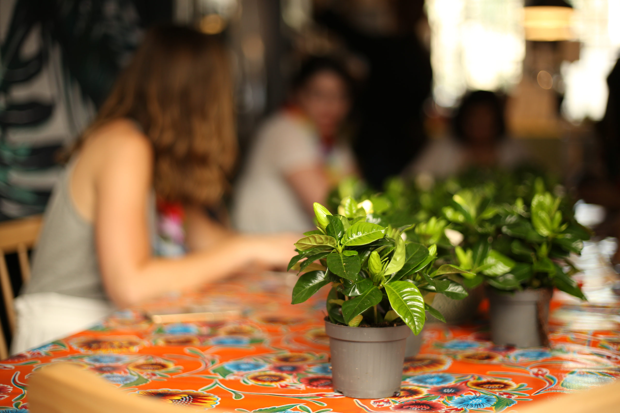 """Nature & lien social –  Si on échangeait autour d'un """"vert"""" ?"""