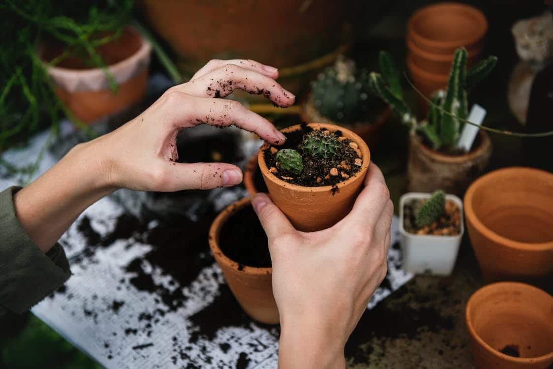 5 activités Mains Vertes à faire chez soi