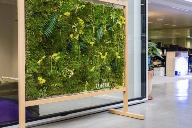 Architecture végétale Cloison végétale