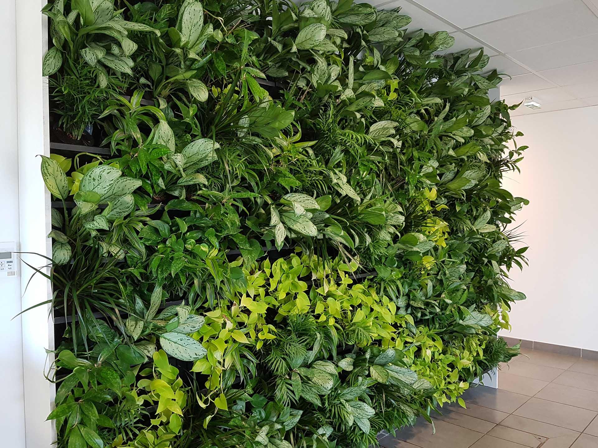Mur en végétaux vivants