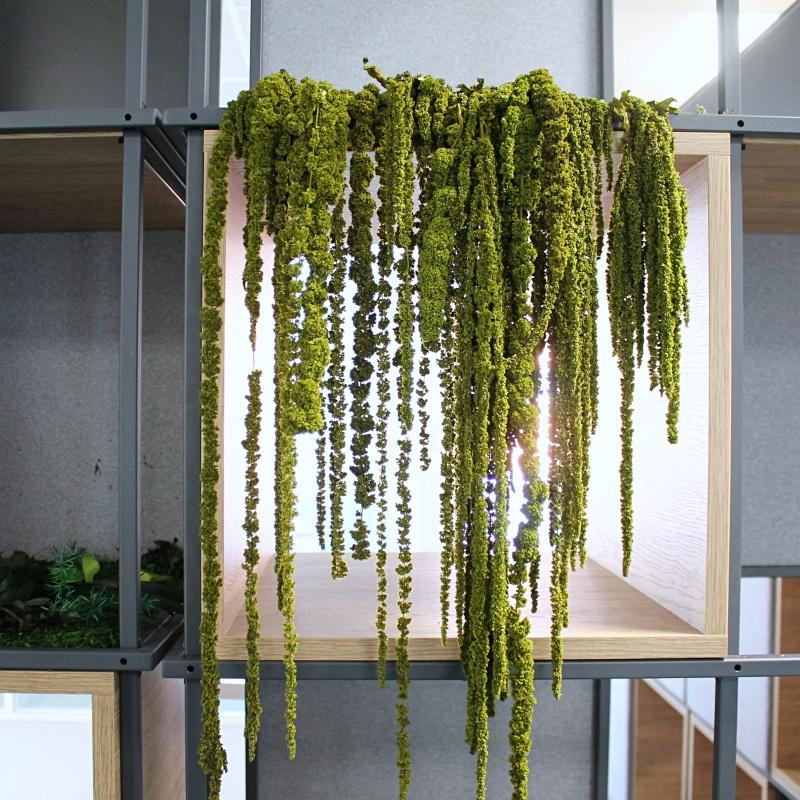 Bibliothèque végétale stabilisé