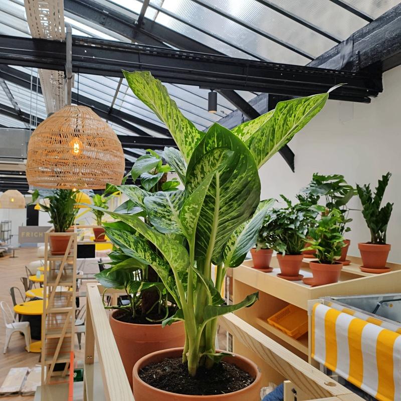 Sélection de plantes d'intérieur pour Frichti