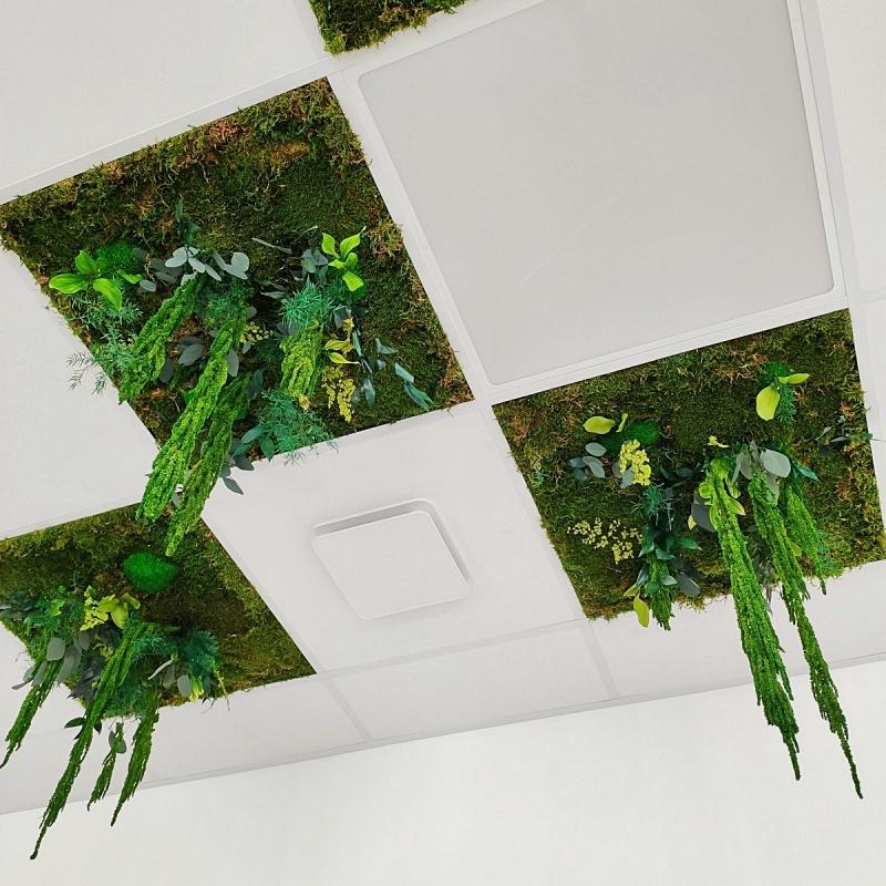 Dalles de faux plafond en végétaux stabilisés